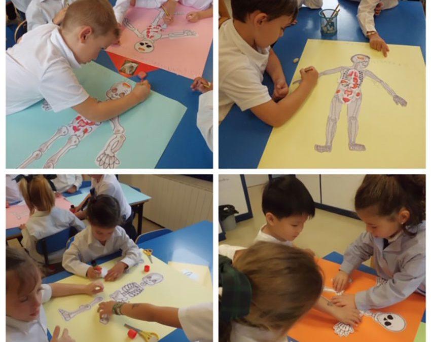 Lecciones de anatomía