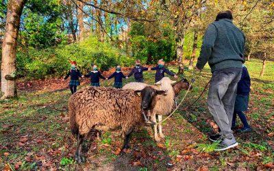 Una granja en Ayalde como alternativa a las excursiones en tiempos de Covid-19